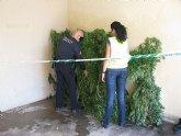 Incautados 45 kilos de marihuana y dos detenidos en una actuación contra el tráfico de drogas en Torre-Pacheco
