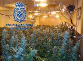 La Policía desmantela una plantación de marihuana ubicada en una vivienda de Molina de Segura