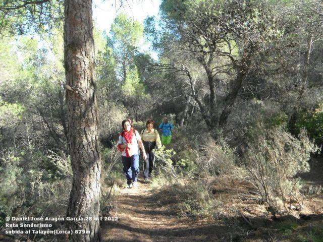 Los buitres leonados acompañan a los senderistas en su subida al Talayón - 2, Foto 2
