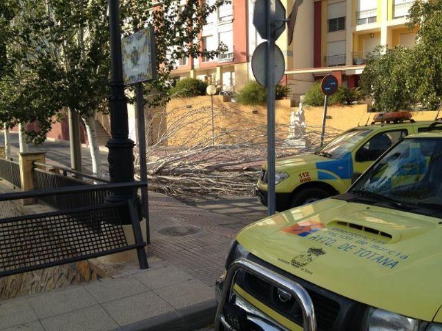 Protecci�n Civil retira varios �rboles de la calzada y caminos rurales, Foto 1