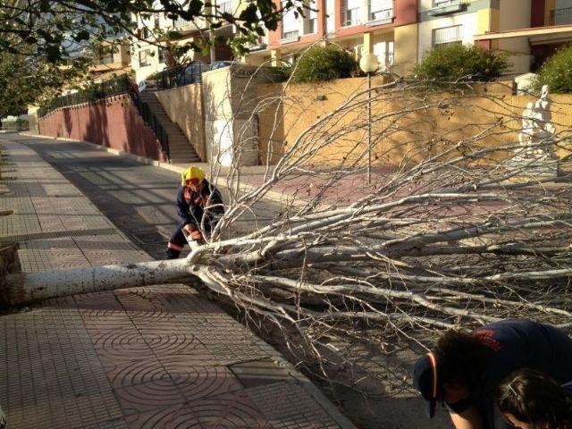Protecci�n Civil retira varios �rboles de la calzada y caminos rurales, Foto 3