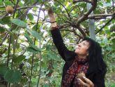 El ayuntamiento se interesa también por el cultivo del kiwi