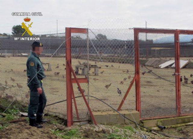 La Guardia Civil desmantela una granja cinegética que enviaba ilegalmente perdices a la provincia de Huelva - 3, Foto 3