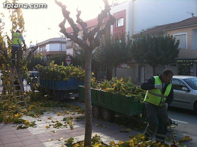 Podan de las moreras en las vías públicas de Totana tras finalizar el arreglo de palmeras - 1, Foto 1