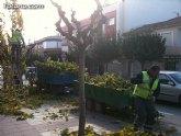 Podan de las moreras en las vías públicas de Totana tras finalizar el arreglo de palmeras