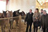 El Alcalde y la Directora General de Ganadería inauguran la tradicional Feria de Ganado Equino de Puerto Lumbreras