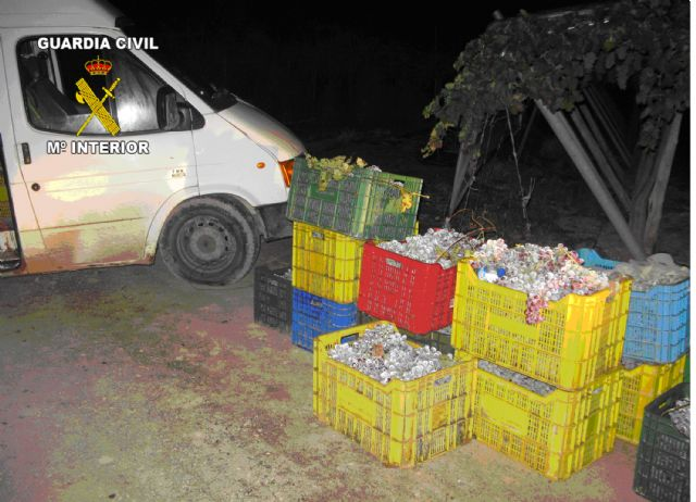 The Civil Guard and local police arrested five people Totana for stealing a grape farm, Foto 1