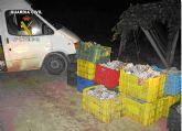 La Guardia Civil y Policía Local de Totana detienen a cinco personas por sustraer uva de una explotación agrícola