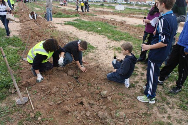 Éxito de participación en la plantación de pinos para crear el primer pulmón urbano de Torre-Pacheco - 2, Foto 2