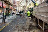 Infraestructuras retira dos árboles de la esquina de Reina Victoria con A�ngel Bruna