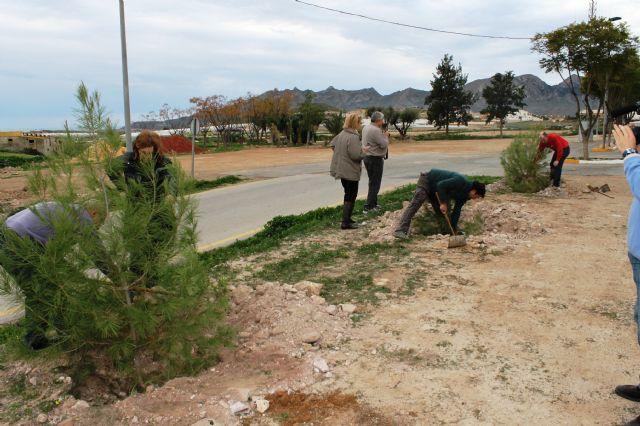 El ayuntamiento y ACOMA replantan los pinos utilizados en Navidad, Foto 1