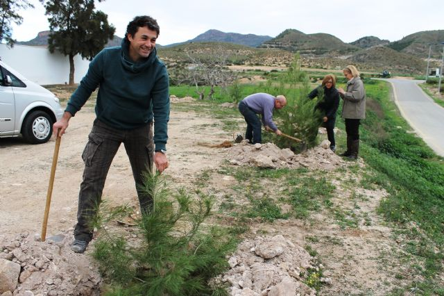 El ayuntamiento y ACOMA replantan los pinos utilizados en Navidad, Foto 2