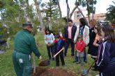 Escolares del municipio ayudan a repoblar la plaza del ayuntamiento con pinos carrasco
