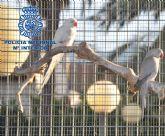 La Policía Nacional desmantela un grupo dedicado al robo de pájaros tropicales
