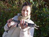 Un particular entrega un caimán a los expertos de Terra Natura Murcia para su cuidado
