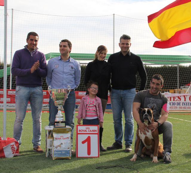 El III Concurso Nacional Canino exhibe 500 ejemplares de más de 50 razas caninas en Puerto Lumbreras - 2, Foto 2
