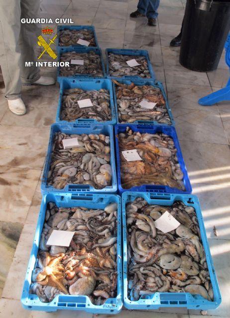 La Guardia Civil decomisa más de 100 kilos de pezqueñines de pulpo - 1, Foto 1