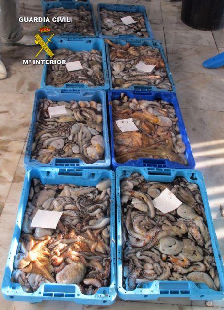 La Guardia Civil decomisa más de 100 kilos de pezqueñines de pulpo - 2, Foto 2