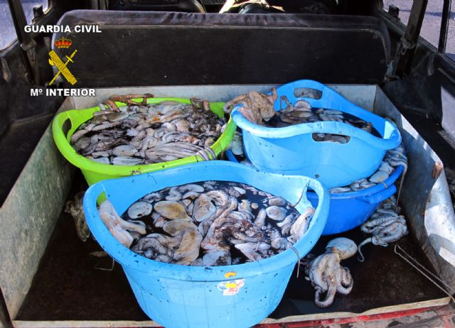 La Guardia Civil decomisa más de 100 kilos de pezqueñines de pulpo - 4, Foto 4