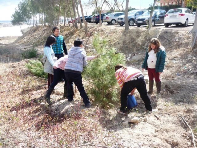 Los colegios de Mazarrón se divierten reforestando los pinos de la campaña de Navidad - 4, Foto 4