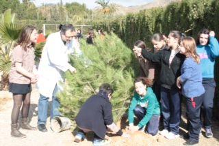 Los colegios de Mazarrón se divierten reforestando los pinos de la campaña de Navidad - 5, Foto 5
