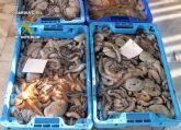 La Guardia Civil decomisa más de 100 kilos de pezqueñines de pulpo