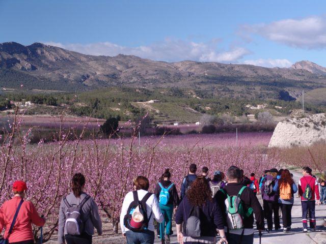 Cerca de 50 senderistas de Totana disfrutaron del espectáculo de la floración de los frutales de cieza en la salida organizada por la concejalía de deportes - 1, Foto 1