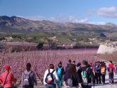 Cerca de 50 senderistas de Totana disfrutaron del espectáculo de la floración de los frutales de cieza en la salida organizada por la concejalía de deportes