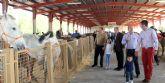 Inaugurada la Feria de Ganado Equino de Puerto Lumbreras que muestra más de 400 ejemplares de ganado durante todo el fin de semana