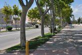 Las plataneras del paseo entre San Javier y La Ribera responden bien al tratamiento contra la pérdida de hojas