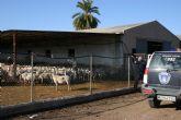 La concejalía de Agricultura y Ganadería informa de las ayudas regionales para las asociaciones de defensa sanitaria ganaderas
