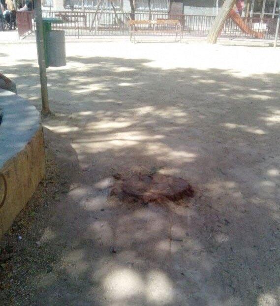 El Grupo Socialista denuncia la tala de tipuanas en el barrio de El Carmen - 1, Foto 1