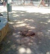 El Grupo Socialista denuncia la tala de tipuanas en el barrio de El Carmen