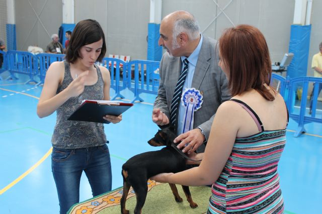 150 ejemplares destacan por su elevado nivel técnico en el II concurso nacional canino de Mazarrón, Foto 2