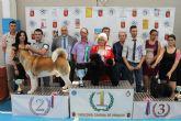 150 ejemplares destacan por su elevado nivel t�cnico en el II concurso nacional canino de Mazarr�n