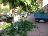 Realizan labores de acondicionamiento del arbolado en las principales avenidas y calles de Totana