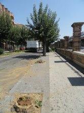 Los socialistas del Barrio del Carmen denuncian la tala de 60 árboles en pleno mes de agosto sin avisar a los vecinos