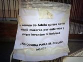 El Grupo Socialista exige al alcalde Cámara que ordene urgentemente la detención de la tala masiva