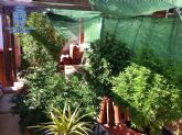 La Policía Nacional desmantela tres plantaciones de marihuana, en domicilios de Murcia capital y en las pedanías de Guadalupe y Puente Tocinos