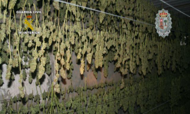 Realizada la mayor incautación de plantas de marihuana en España hasta la fecha - 1, Foto 1