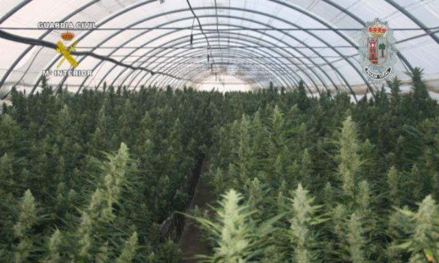 Realizada la mayor incautación de plantas de marihuana en España hasta la fecha - 2, Foto 2