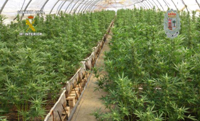 Realizada la mayor incautación de plantas de marihuana en España hasta la fecha - 4, Foto 4