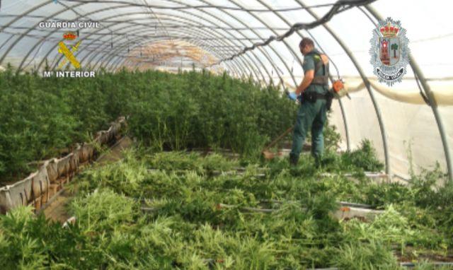 Realizada la mayor incautación de plantas de marihuana en España hasta la fecha - 5, Foto 5