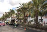 Quitan las ramas bajas y los dátiles de las palmeras de la calle Real para evitar molestias