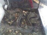 Protección Civil retira una serpiente en la calle Pilar que había causado la alarma entre vecinos