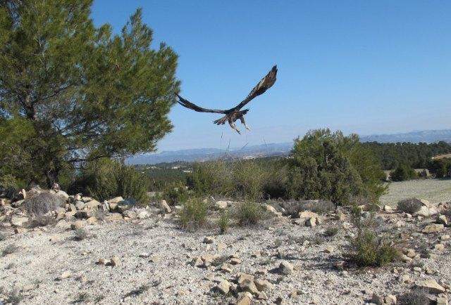 Los espacios naturales protegidos se unen para celebrar el Día Mundial de las Aves, Foto 1