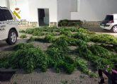 Operación TIRALÍNEAS. Desmantelados dos puntos de distribución de drogas y otro de cultivo de marihuana en Totana