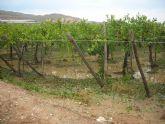 La concejalía de Agricultura propone solicitar a la Consejería que realice informes técnicos que permitan al ministerio aplicar rebaja en los módulos del IRPF 2014 de la uva de mesa