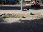 UPyD propone una ordenanza para gestionar y proteger el arbolado urbano