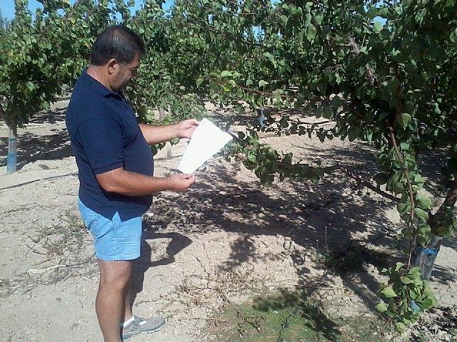 La imagen muestra a un agricultor de Mazarrón consultando la hoja de recomendaciones de la Consejería para su plantación de albaricoqueros., Foto 1